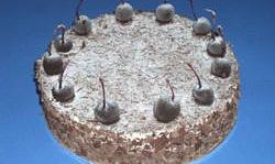 Black forest cake  29768.1294062786.1280.1280